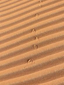 Footprints 17