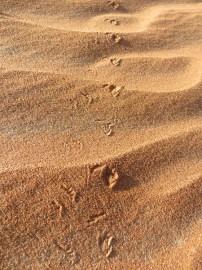 Footprints 9