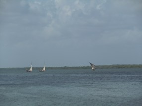Dhows 9