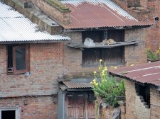 Rooftop 19