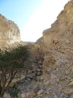 Wadi Al Nayhan 10