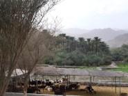 Wadi Hayl 1