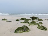The Beach 16