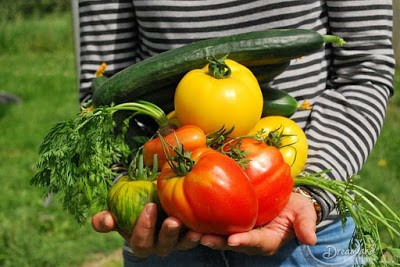 Starting A Vegetable Garden Can Really Save Some Money