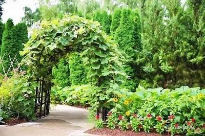 Fun and Easy Garden Arbor Ideas and Plans