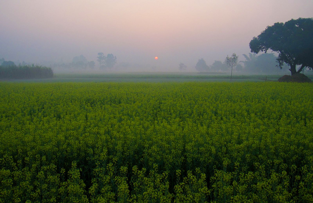 Field in iIndia