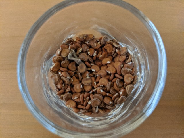 Datura seeds