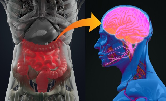 Gut health affects the brain, and sleep