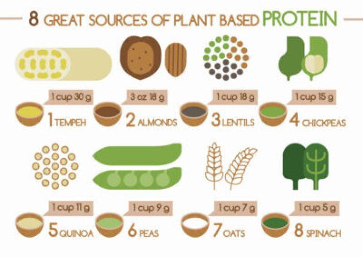 Best Protein Foods