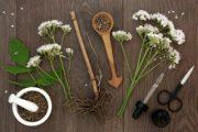 Valerian (Valeriana officinalis) - Sleep Herb
