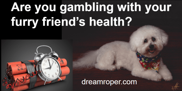 Gambling with your furry friend's health