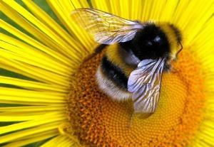 bees in dreams