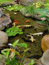 53 cheap landscaping updates that make a splash 32