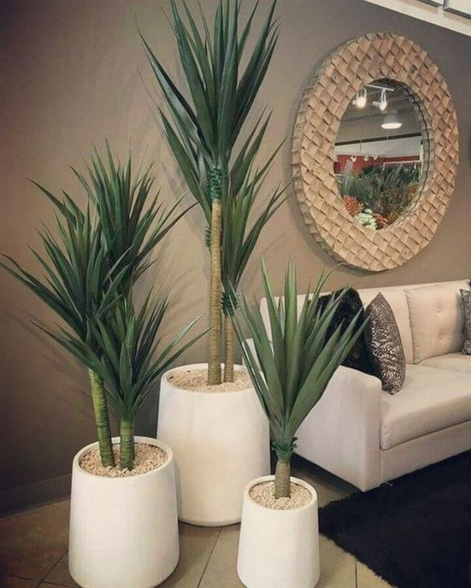 11 Indoor Plants For Home Or Office – Home Decor 18