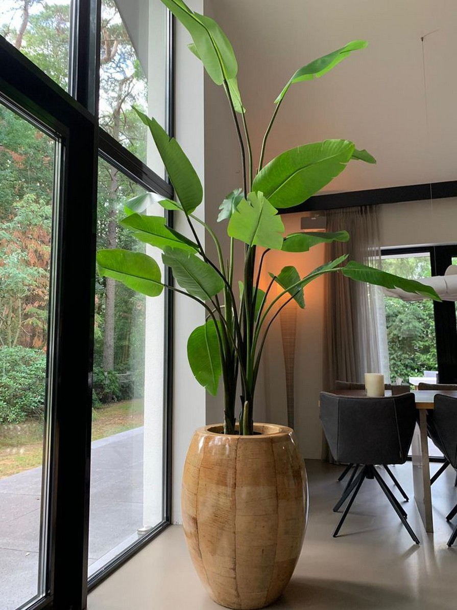 11 Indoor Plants For Home Or Office – Home Decor 19