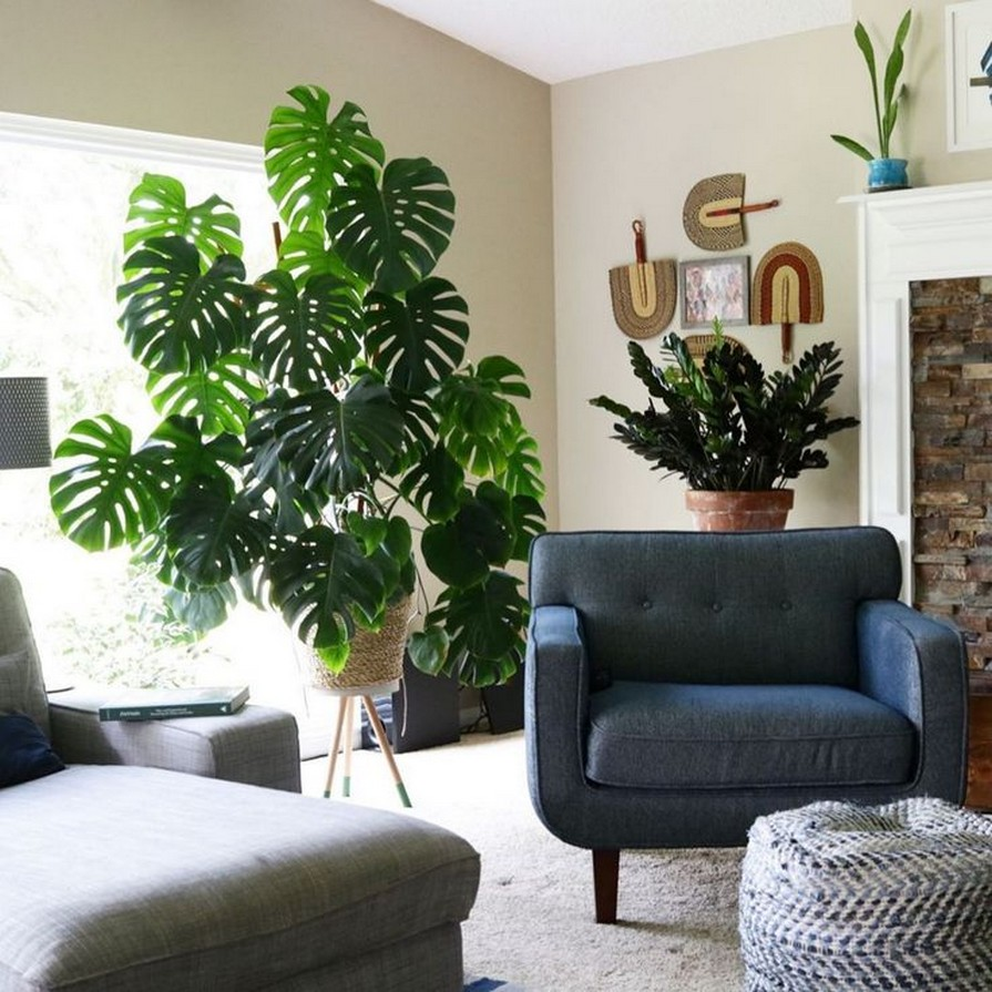 11 Indoor Plants For Home Or Office – Home Decor 23