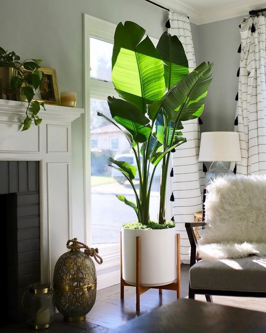 11 Indoor Plants For Home Or Office – Home Decor 29