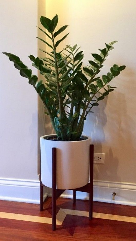 11 Indoor Plants For Home Or Office – Home Decor 32