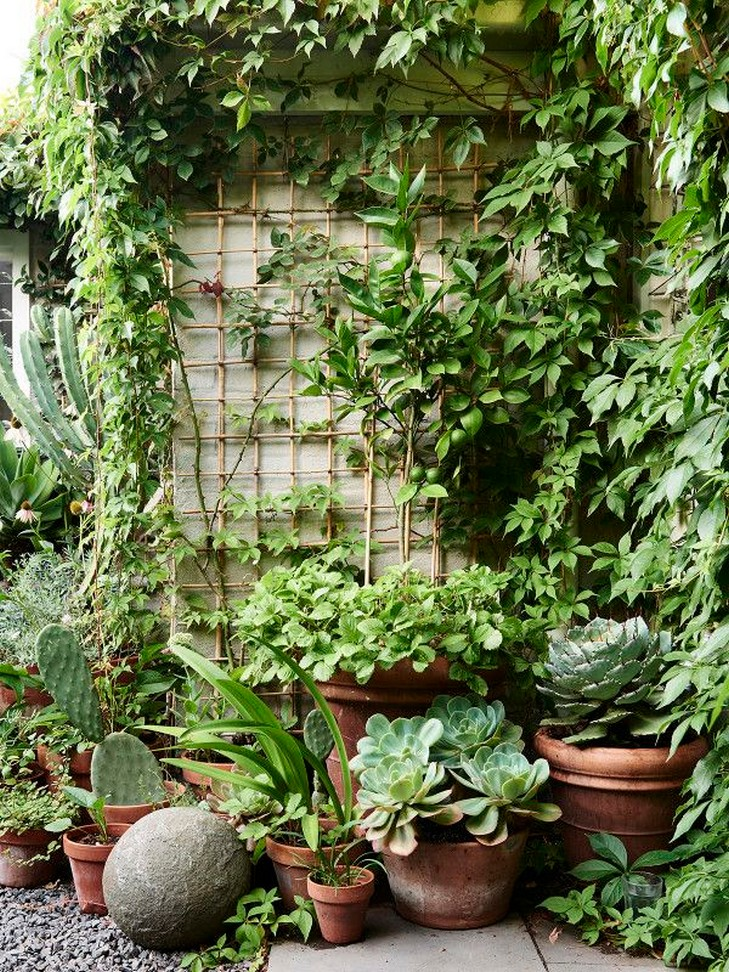 11 Outdoor Potted Plants Grow Helping 10