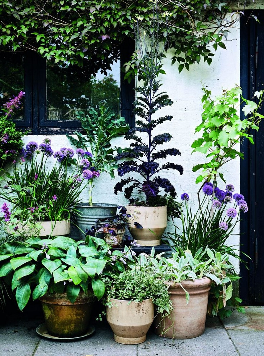 11 Outdoor Potted Plants Grow Helping 12