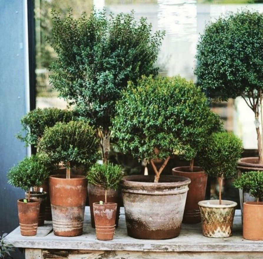 11 Outdoor Potted Plants Grow Helping 15