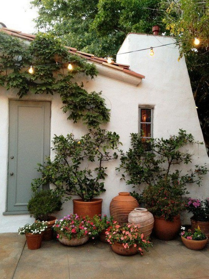 11 Outdoor Potted Plants Grow Helping 5