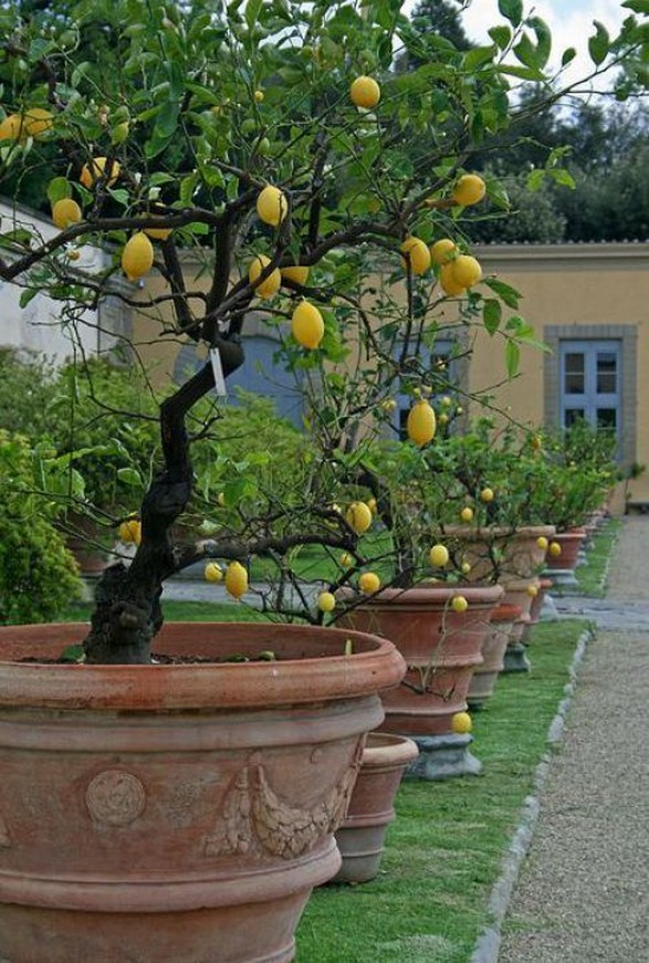 12 Container Gardening Ideas For Pots And Planting Herbs Home Decor 4