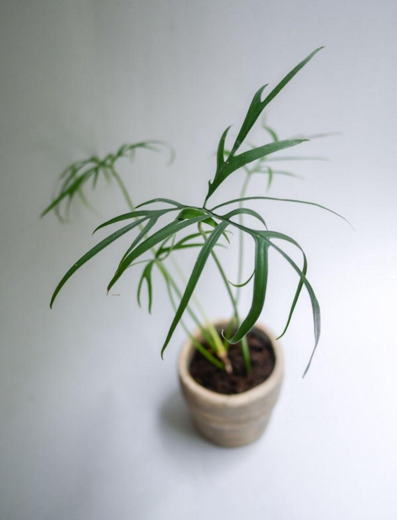 48 Popular Indoor Plants For Tropics Zone 16