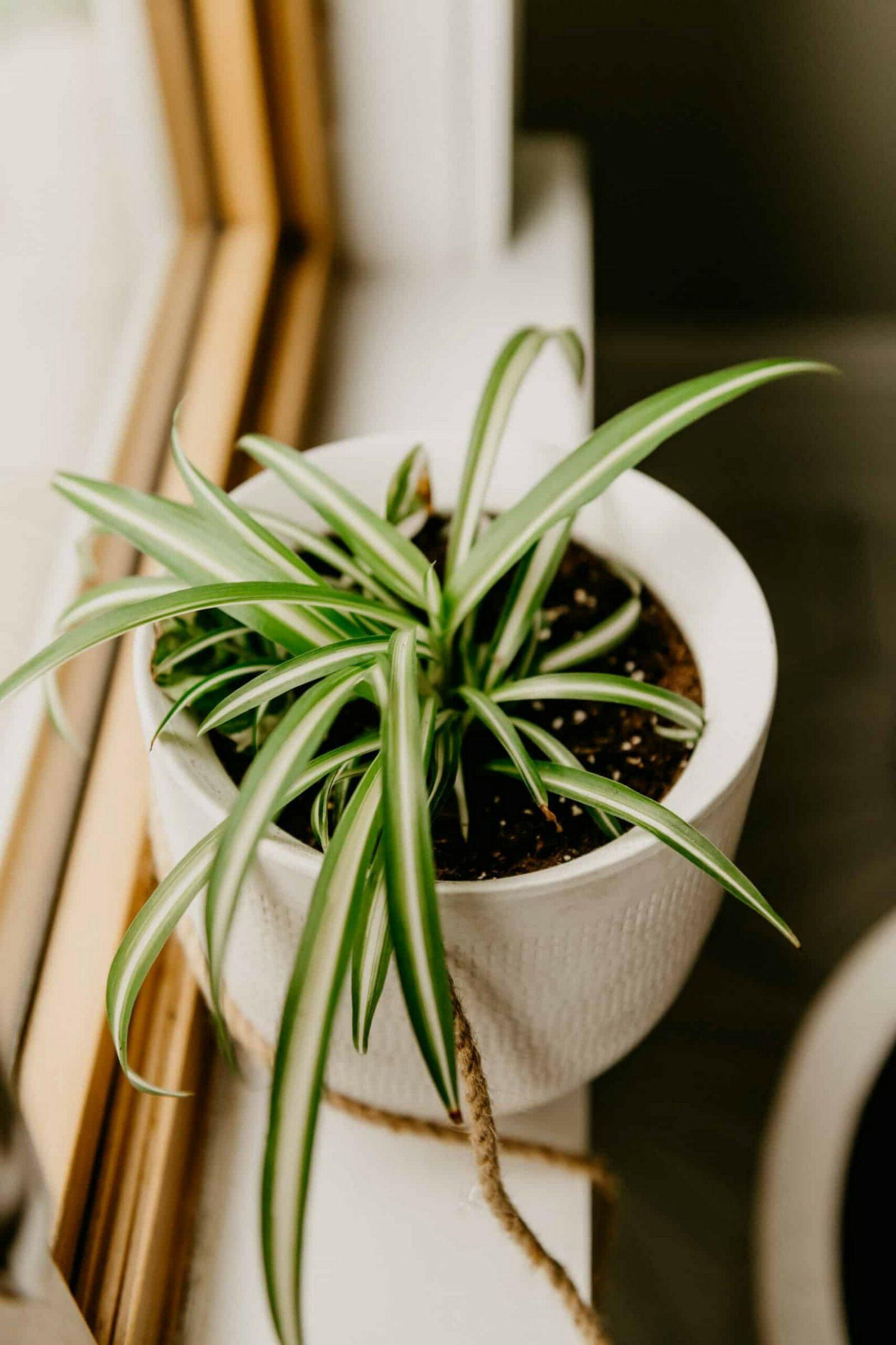48 Popular Indoor Plants For Tropics Zone 39