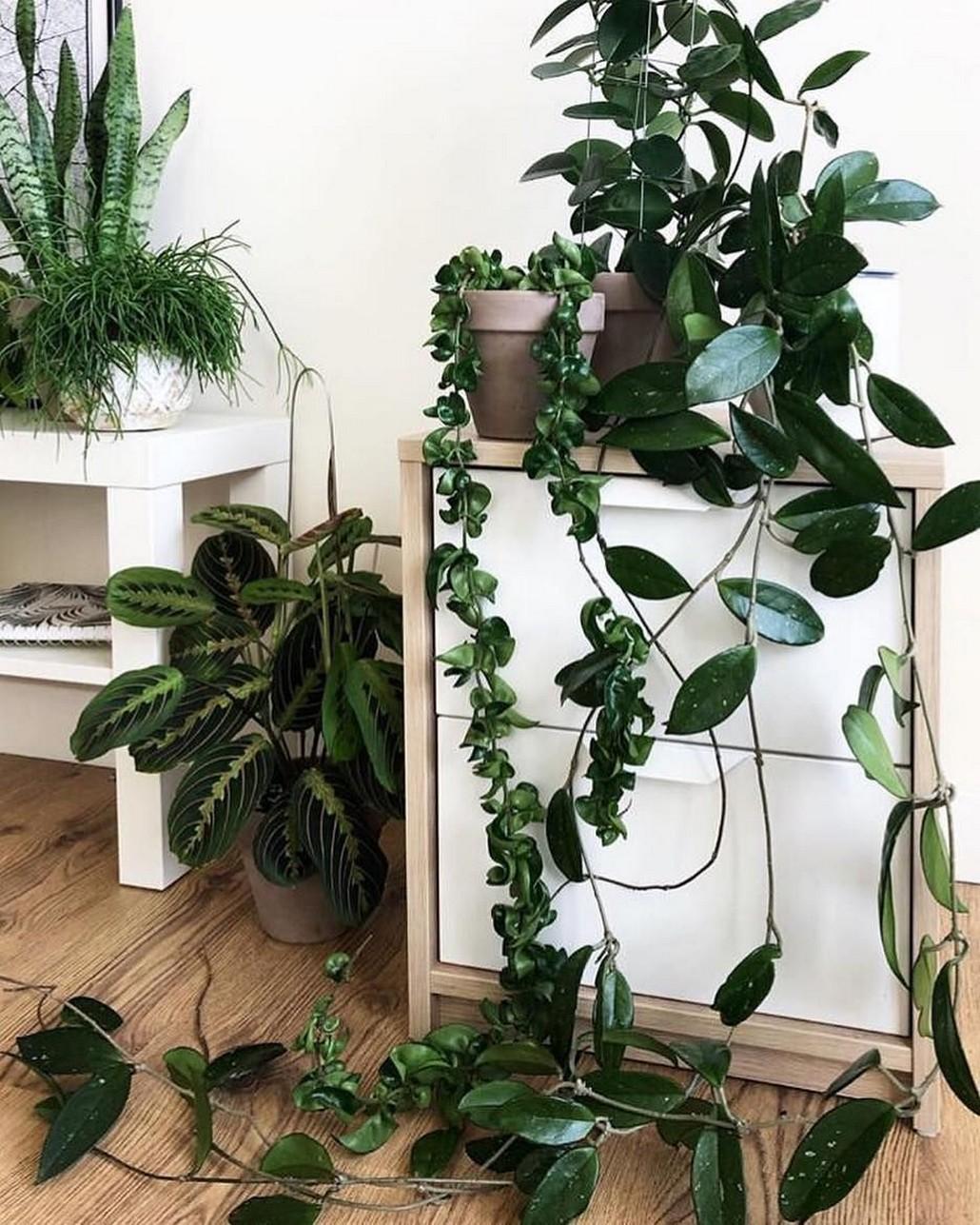 48 Popular Indoor Plants For Tropics Zone 48