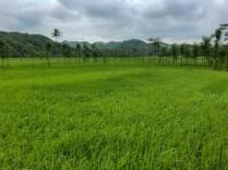 Lush Green Lombok