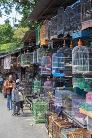Bird Market Malang