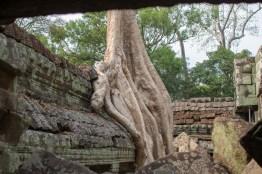 Tree eats Ruins