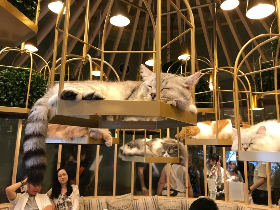 Cat Cafe Cats