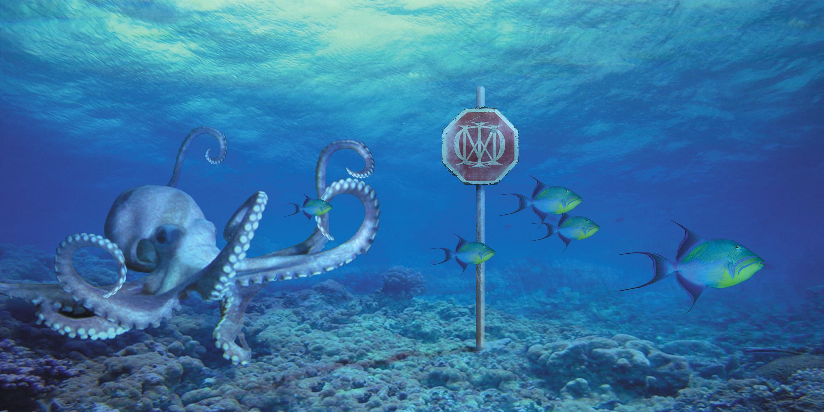 DT - Octopus