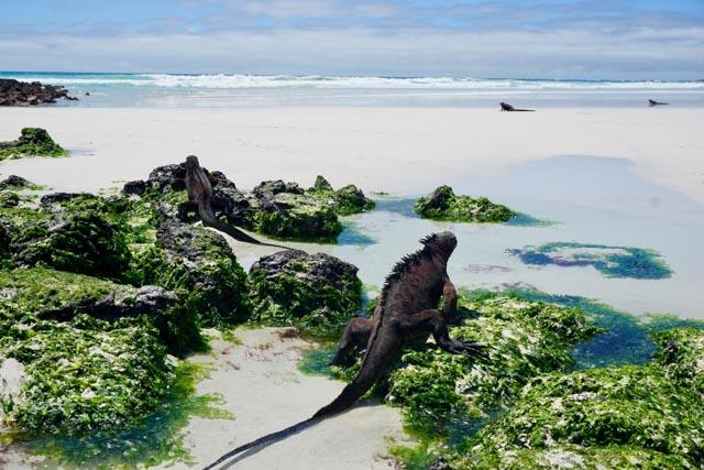 Galapagos: das Paradies auf Erden