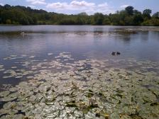 Lake at Hardwick Hall with water lilies
