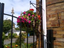 The hanging baskets are looking good.. Hubby rigged up a water system to stop us keep climbing everyday to water. you can see the pipe coming into this one
