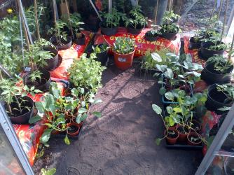 The Tomato plants are now in along with some peppers and cucumber and egg plants..