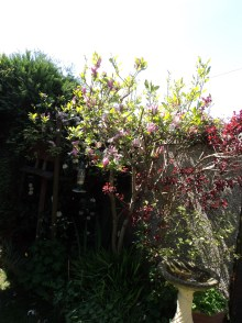 Mangnolia and Rhododendrons