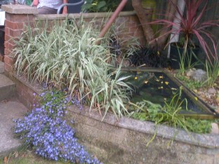 The fish pond, hubby made years ago, building up from brickwork taken from a 70's fireplace that we took out.