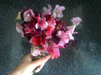 This was just one of three bunches this size that I picked in one day.