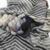 Artyarns Home Sweet Home Cashmere Blanket Kit, Dream Weaver Yarns LLC