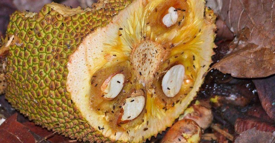 Natural Ways to Get Rid of Fruit Flies