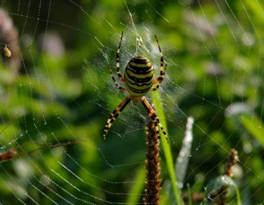 Yellow Garden Spider Benefits to Your Garden and How to Attract Them