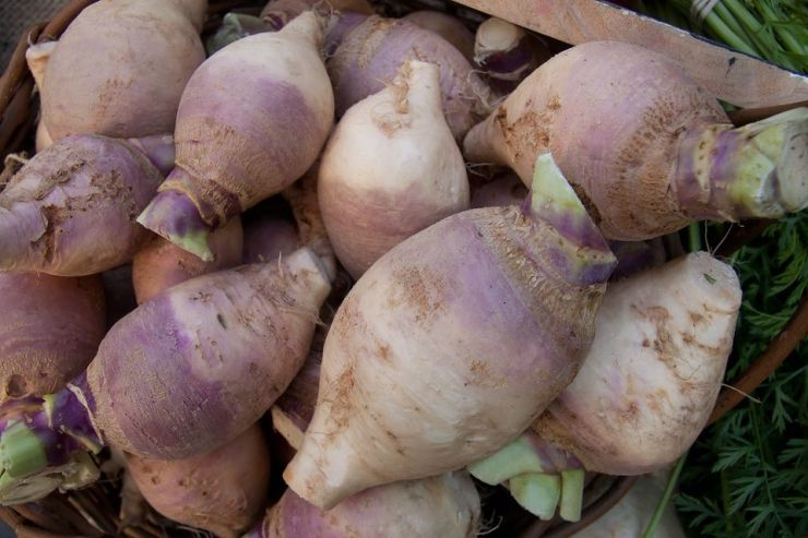 How to Grow Swede Vegetable (Rutabaga)
