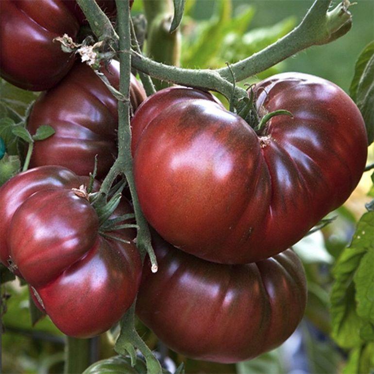 Black Krim - Types of Tomatoes (Varieties)