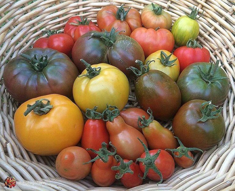 Heritage Rainbow Mix tomatoes
