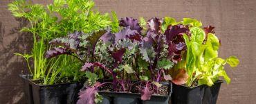 Kale Companion Plants: Best and Worst Companions