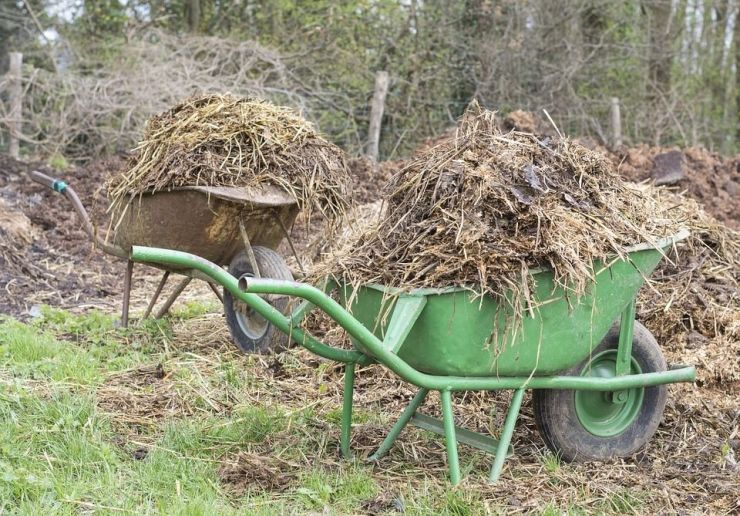Using Manures in Your Vegetable Garden: Basic Guide